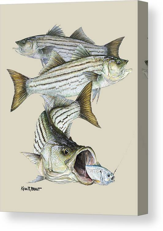 Striped Bass Canvas Print Canvas Art By Kevin Brant