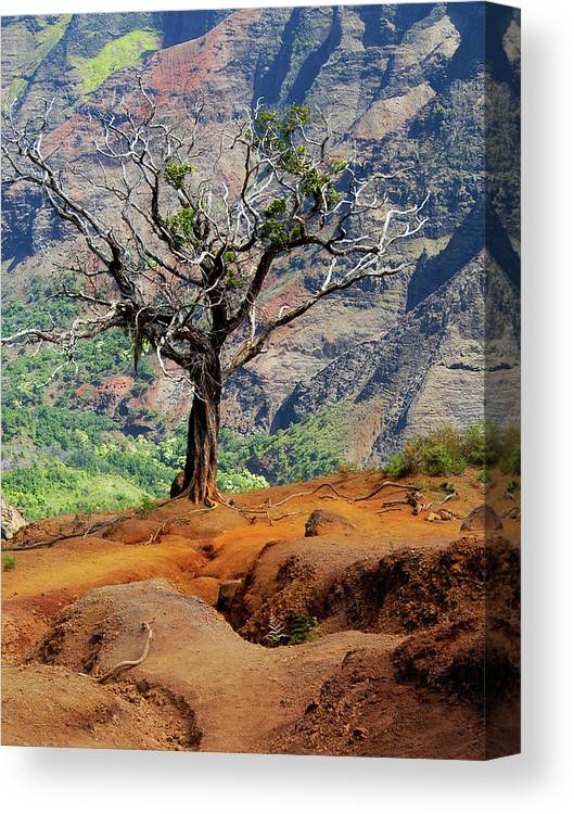 Tree Canvas Print featuring the photograph Twisted Tree, Wiamea Canyon, Kawai Hawaii by Michael Bessler