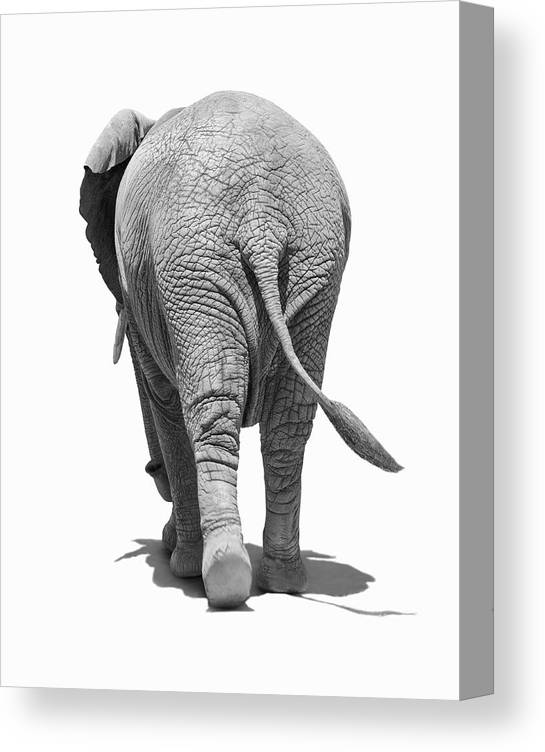 Shadow Canvas Print featuring the photograph Elephants Behind by Burazin