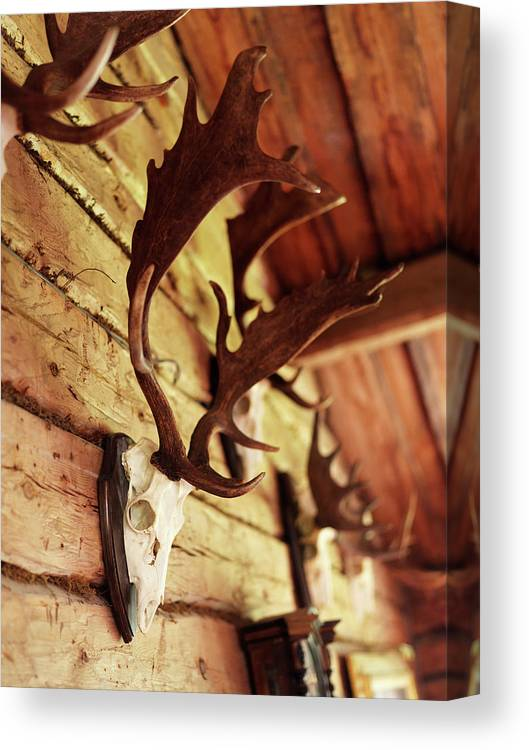 Horned Canvas Print featuring the photograph Antler Collection On Wall by Granefelt, Lena