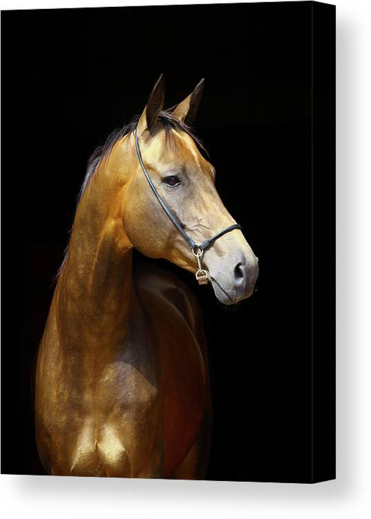 Horse Canvas Print featuring the photograph Golden Horse by Photographs By Maria Itina