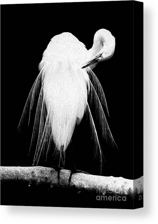 Digital Canvas Print featuring the digital art Great Egret In Full Bloom 3 by Kenneth Montgomery