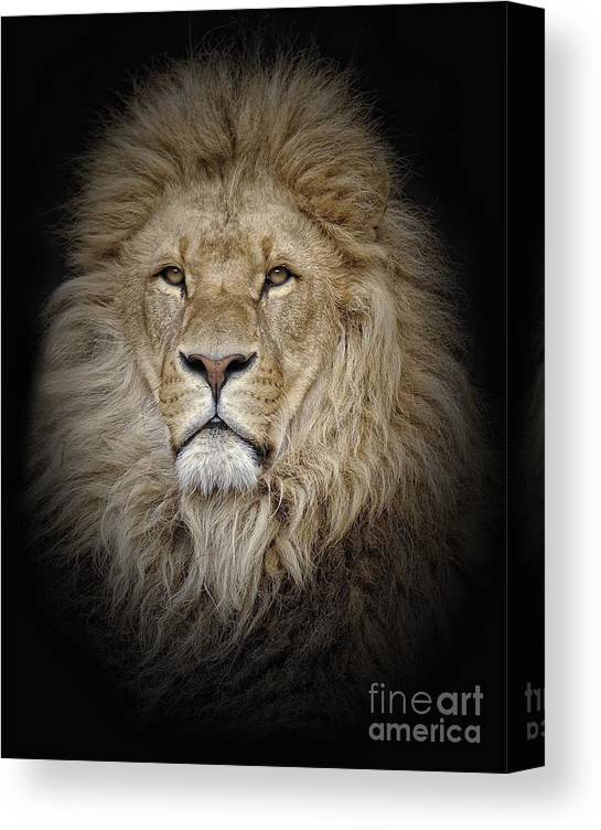 Big Cat Canvas Print featuring the photograph Portrait Of Lion Against Black by Stephan Naumann / Eyeem