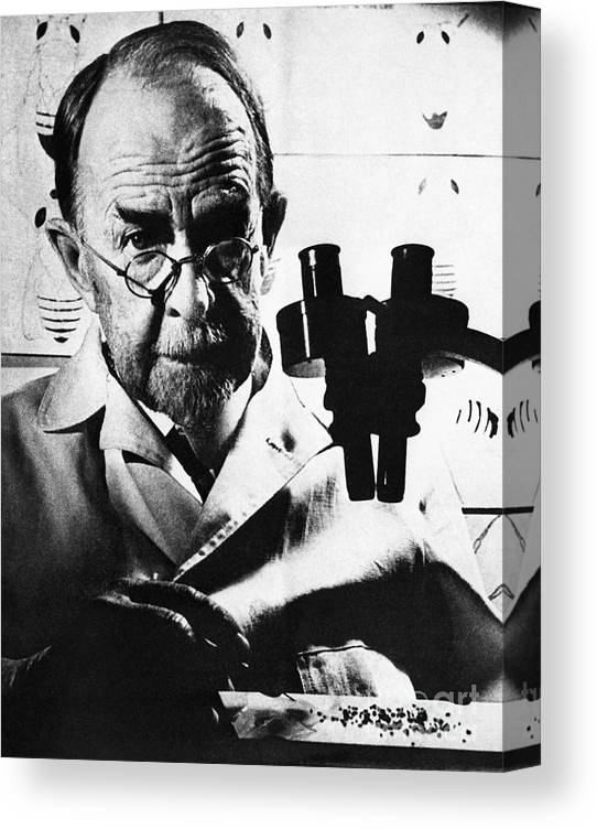 Microscope Canvas Print featuring the photograph Thomas Hunt Morgan With Microscope by Bettmann