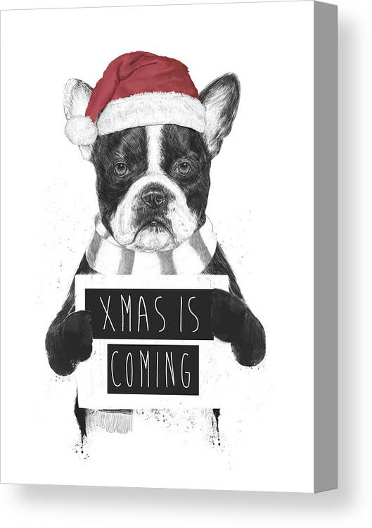 Bulldog Canvas Print featuring the mixed media Xmas is coming by Balazs Solti