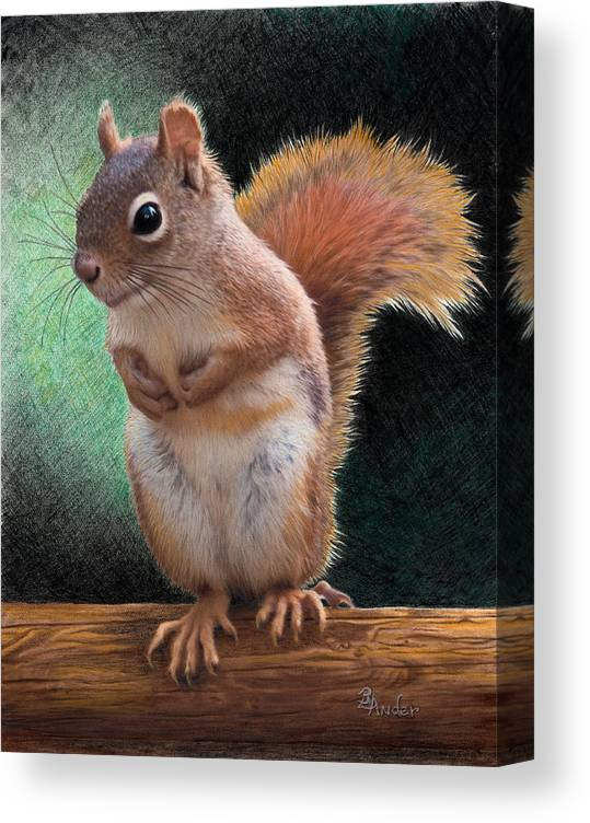 Squirrel Canvas Print featuring the drawing Please by Brent Ander