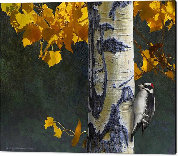 Aspen And Downy Woodpecker by R christopher Vest