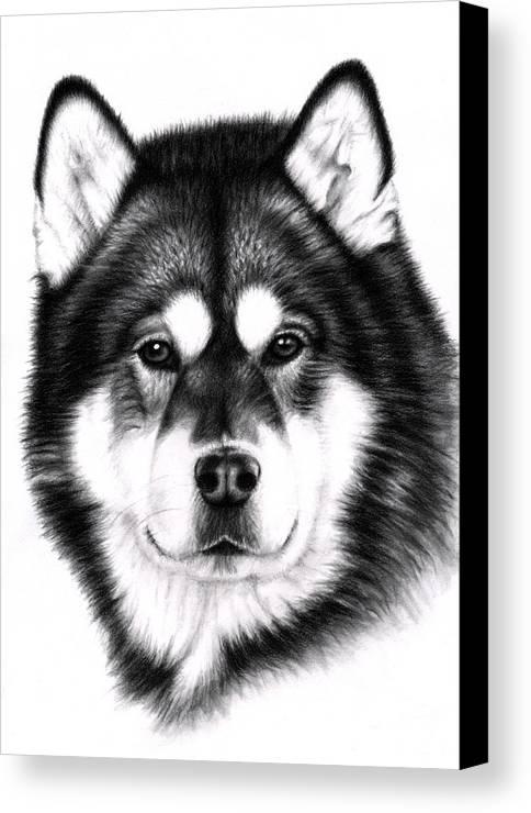Dog Canvas Print featuring the drawing Alaskan Malamute Portrait by Nicole Zeug