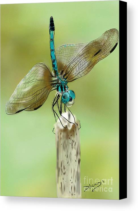 Dragonflies Canvas Print featuring the drawing Dragon Fly by Deborah Vicino
