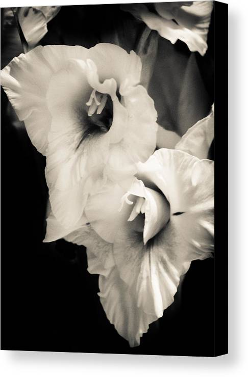 Black And White Canvas Print featuring the photograph Gladiolas by Gabrielle Harrison