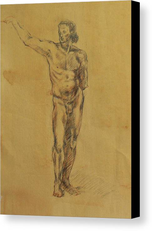 Nude Canvas Print featuring the drawing Male Nude 5 by Becky Kim