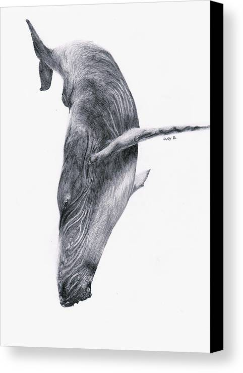 Whale Canvas Print featuring the drawing Whale by Lucy D
