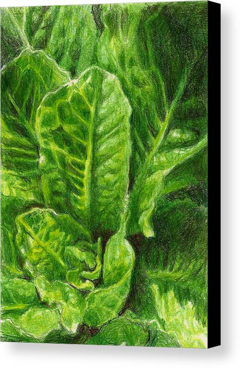 Lettuce Canvas Print featuring the photograph Romaine Unfurling by Steve Asbell