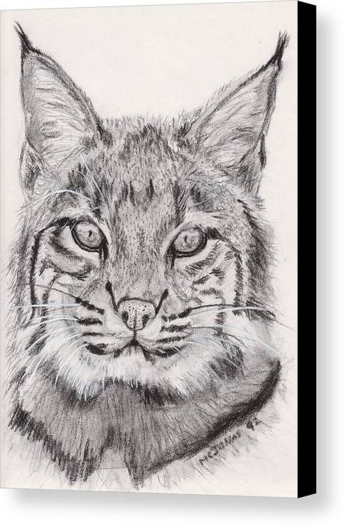 Nature Canvas Print featuring the drawing Bobcat by Marqueta Graham