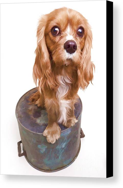 Dog Canvas Print featuring the photograph King Charles Spaniel Puppy by Edward Fielding