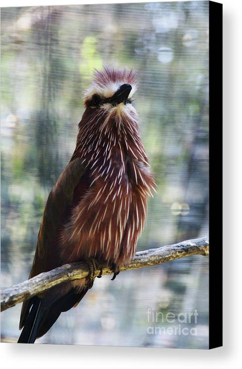 Bird Canvas Print featuring the photograph Perched - 2 by Linda Shafer