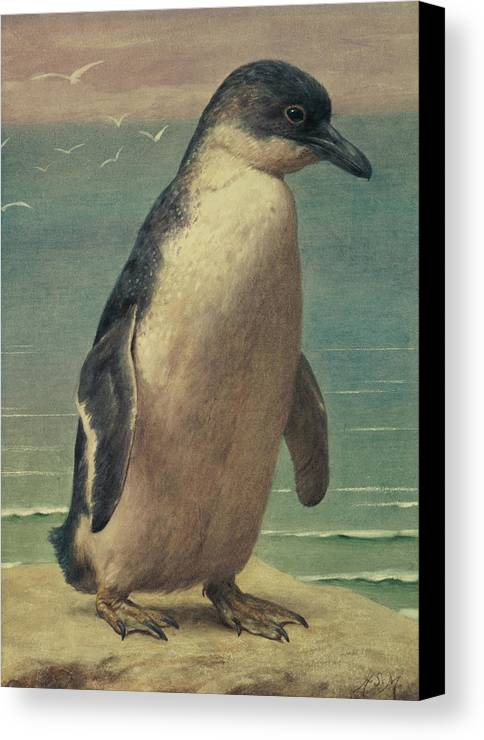 Study Canvas Print featuring the painting Study Of A Penguin by Henry Stacey Marks