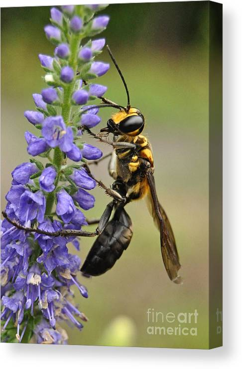 Bee Canvas Print featuring the photograph Bee Kind by Kathy Baccari