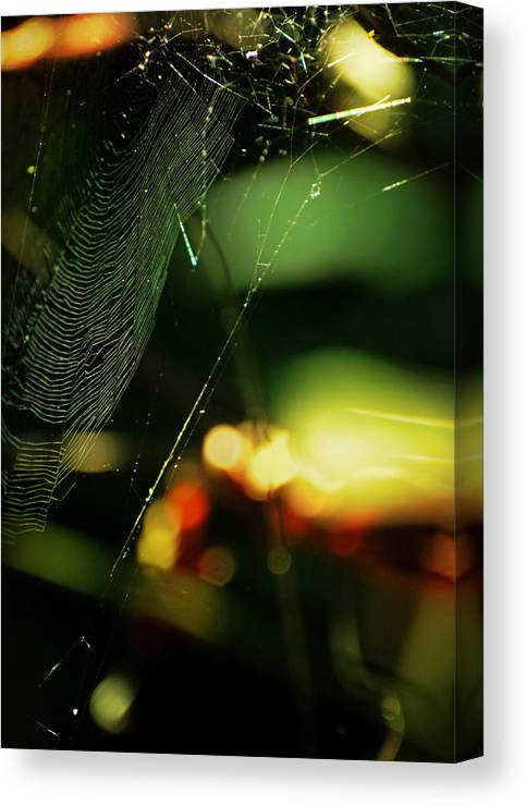 Spiderweb Canvas Print featuring the photograph Crown'd by Rebecca Sherman