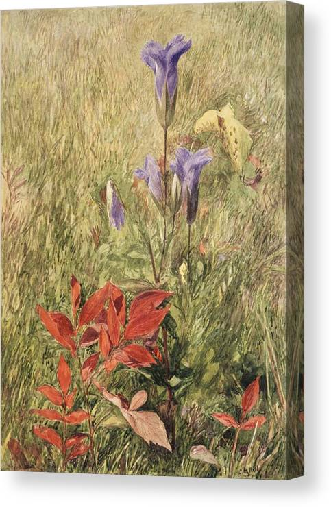 John Henry Hill (american Canvas Print featuring the painting Fringed Gentians by MotionAge Designs