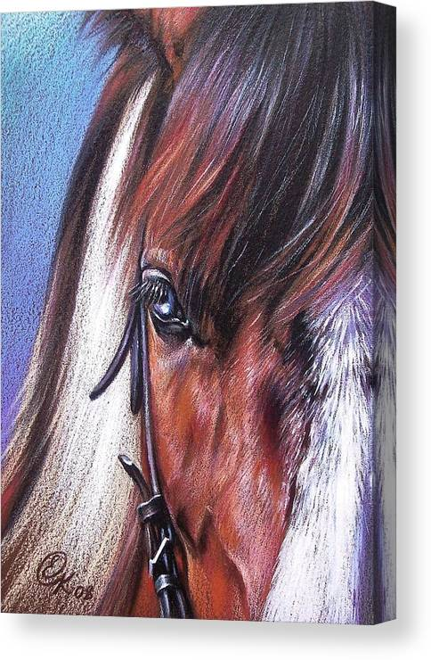 Horse Animal Portrait Drawing Art Canvas Print featuring the drawing Magnificent Paint by Elena Kolotusha