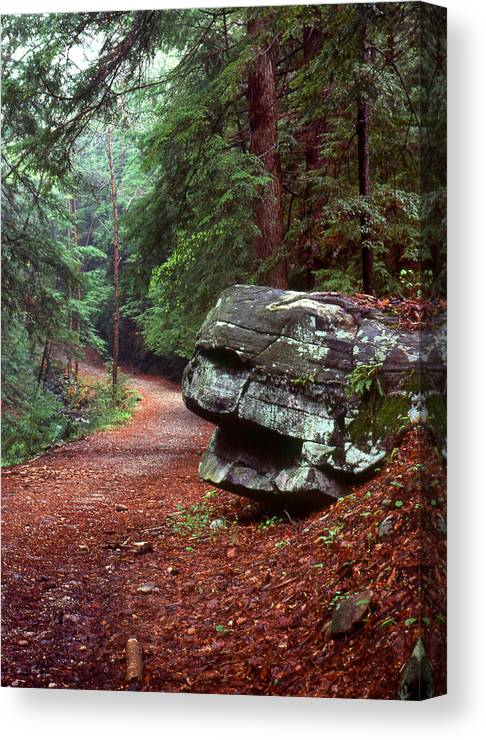 Path Canvas Print featuring the photograph Woodland Path Naugatuck State Forest by Tony Ramos