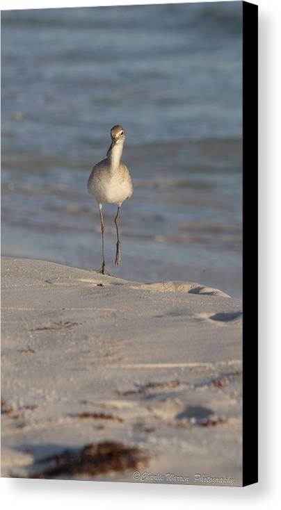 Beach Canvas Print featuring the pyrography Walking Tall by Charles Warren
