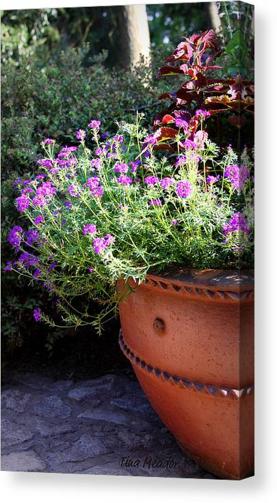 Flower Canvas Print featuring the photograph Flower Pot by Tina Meador