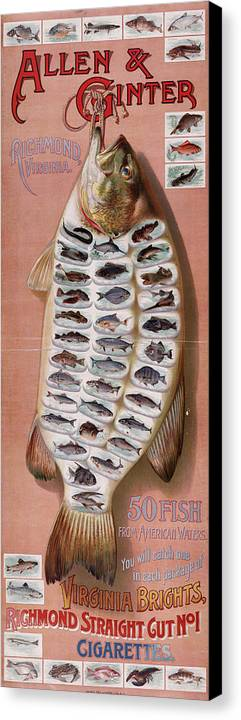 Fish Canvas Print featuring the digital art 50 Fish From American Waters by Georgia Fowler