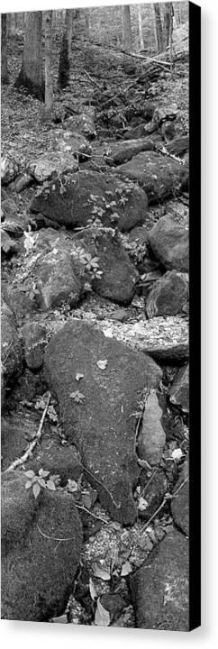 Trees Canvas Print featuring the photograph Thirsty For Water by Ed Smith