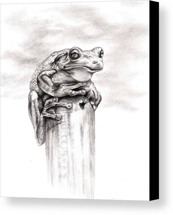 Frog Canvas Print featuring the drawing Batting Coach by Kathleen Kelly Thompson