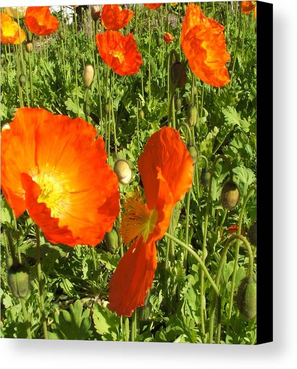 Flowers Canvas Print featuring the photograph Flowers by Shari Chavira