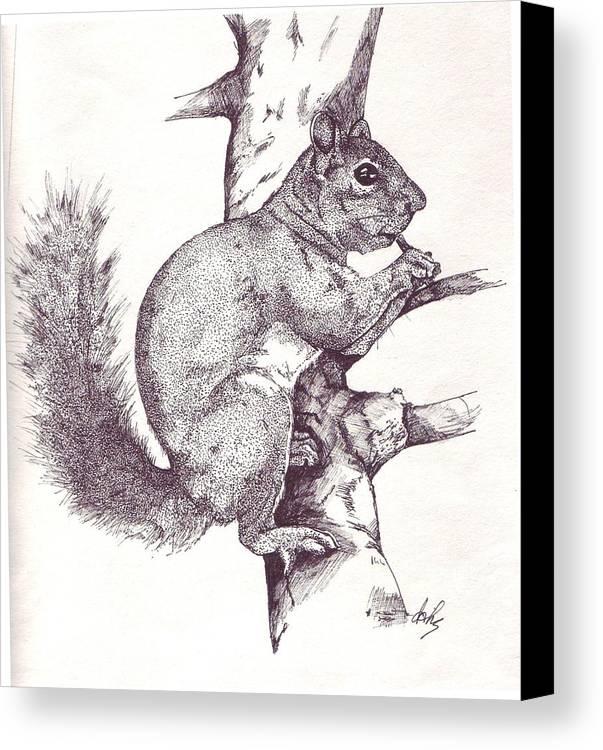 Squirrel Canvas Print featuring the drawing Grey Squirrel by Debra Sandstrom
