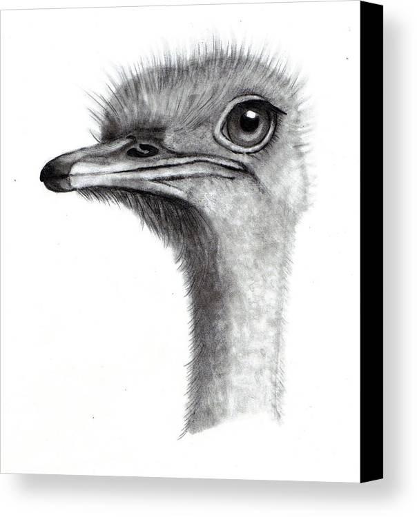 Ostrich Canvas Print featuring the drawing Ostrich Head In Pencil by Joyce Geleynse