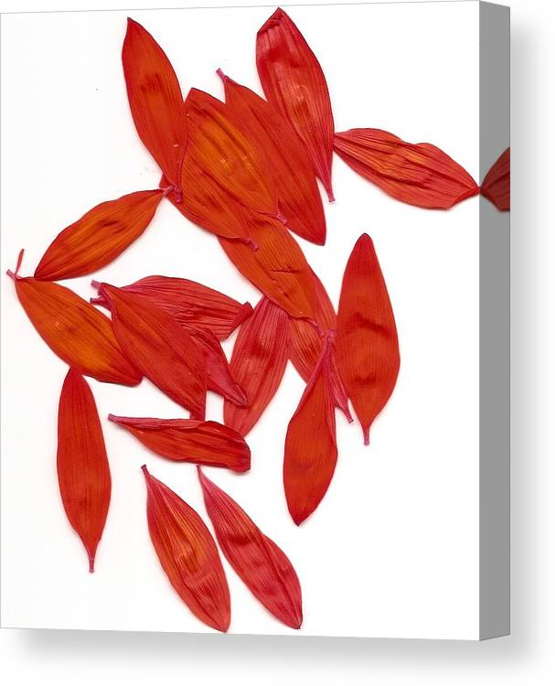Flowers Canvas Print featuring the photograph Petals by Ana Aguiar