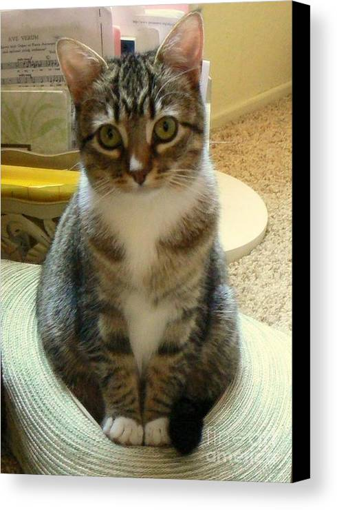 Kitty Canvas Print featuring the photograph Cat In The Hat by Diana Besser