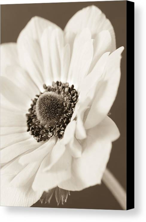 Anemone Canvas Print featuring the photograph A Focus On The Details by Caitlyn Grasso