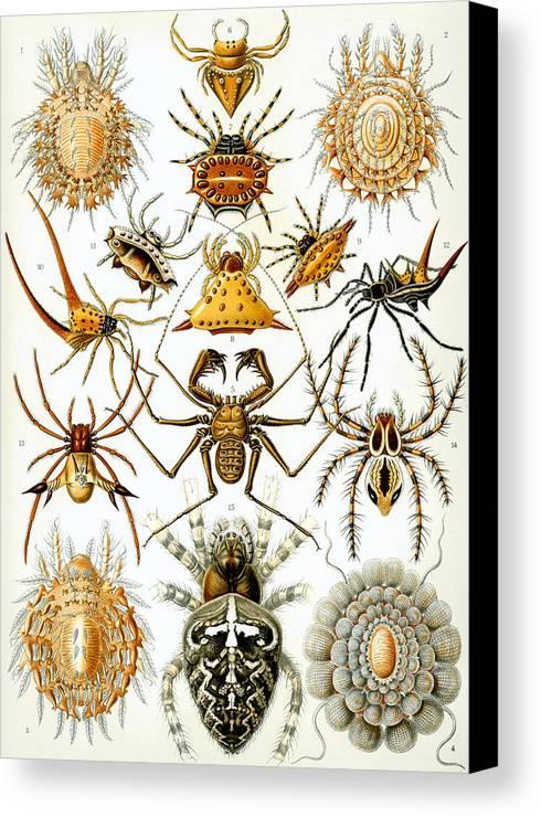 Arachnida Canvas Print featuring the digital art Arachnida by Georgia Fowler