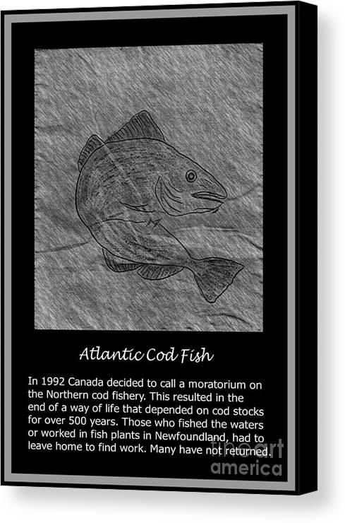 Atlantic Cod Fish Sketch Canvas Print featuring the photograph Atlantic Cod Fish Sketch by Barbara Griffin