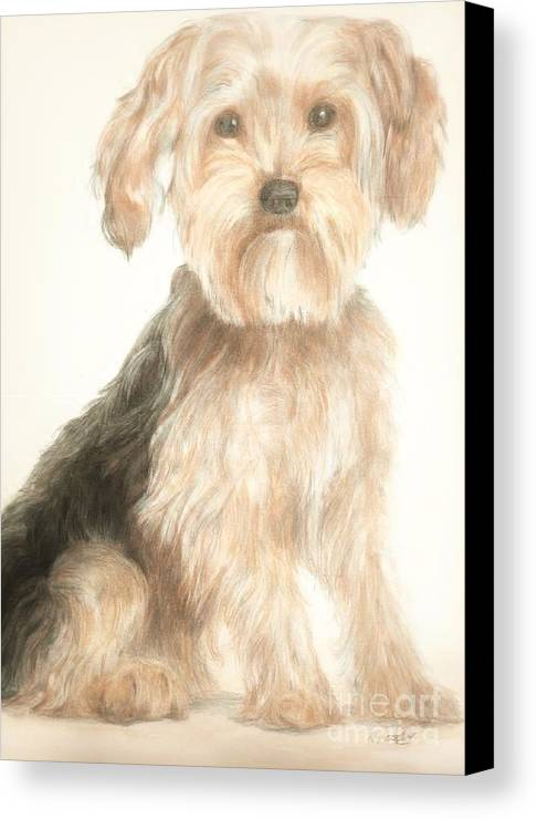 Dog Canvas Print featuring the drawing Charlie by Meagan Visser