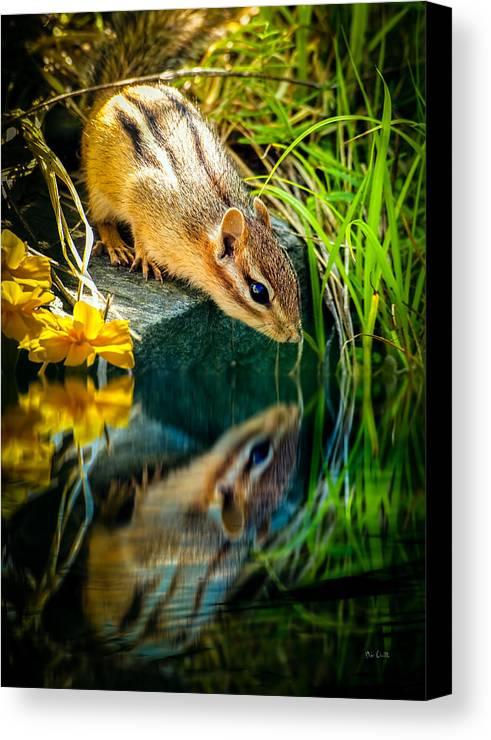 Chipmunk Canvas Print featuring the photograph Chipmunk Reflection by Bob Orsillo