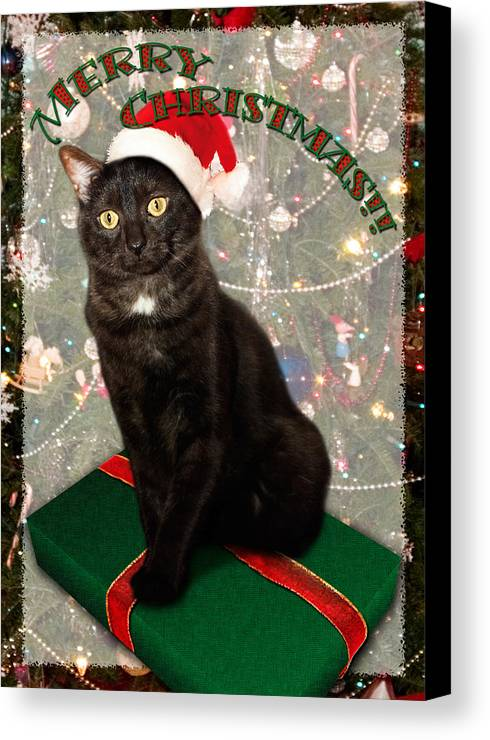 3scape Photos Canvas Print featuring the photograph Christmas Cat by Adam Romanowicz