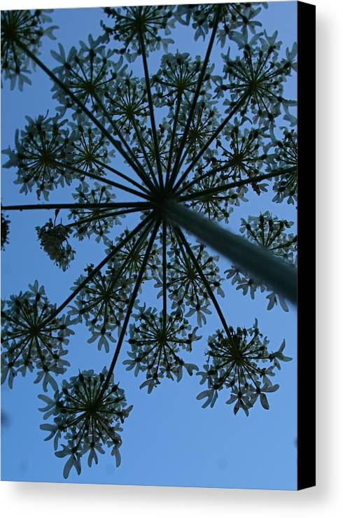 Cow Parsley Canvas Print featuring the photograph Cow Parsley Outlined Against A Summer Sky by Susan Leake