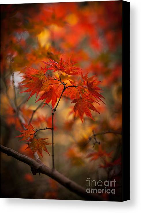 Acer Canvas Print featuring the photograph Crown Of Fire by Mike Reid