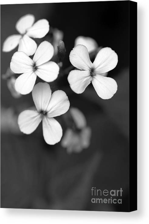 Floral Canvas Print featuring the photograph Family by Amanda Barcon