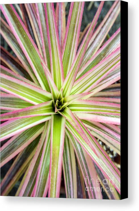 Bromiliad Canvas Print featuring the photograph Firecracker Bromiliad by Darleen Stry
