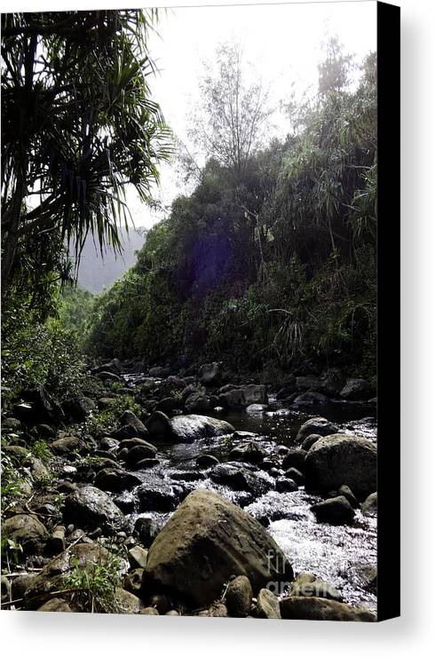 Kauai Canvas Print featuring the photograph Kauai River by Kelley Belisle