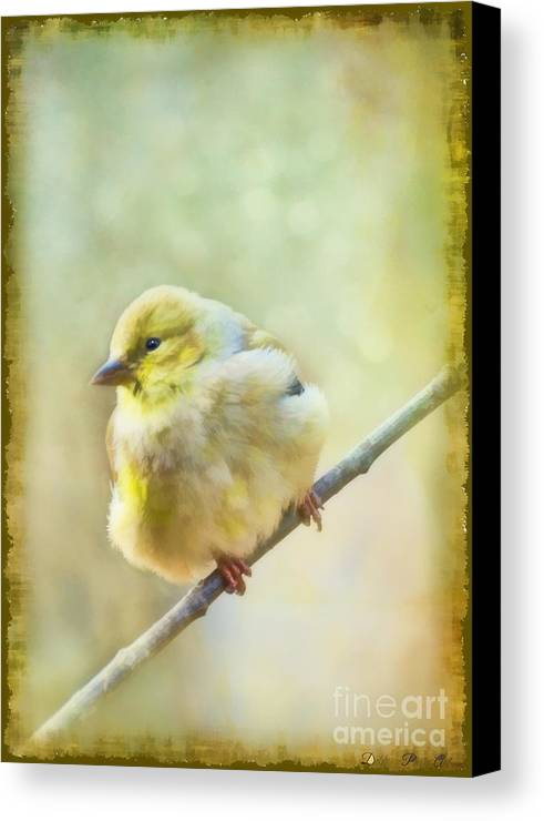 Wild Canvas Print featuring the photograph Little Softie Gold Finch - Digital Paint by Debbie Portwood