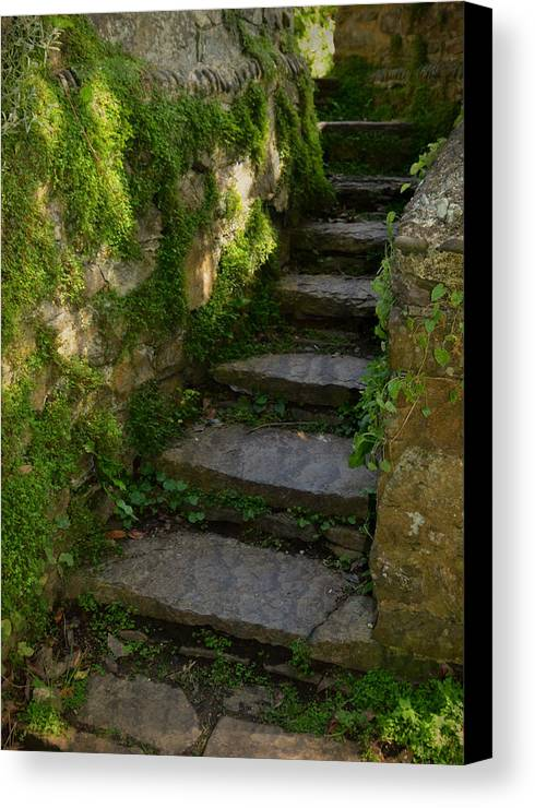 Step Canvas Print featuring the photograph Mossy Steps by Carla Parris