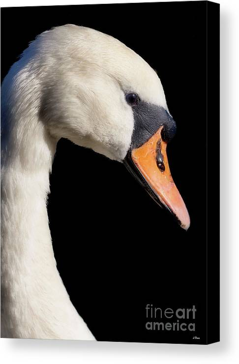 Swans Canvas Print featuring the photograph Mute Swan by Wobblymol Davis